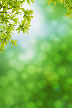 green background: Green leves on green background