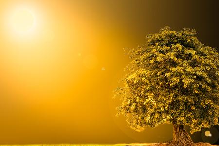 orange sunset: Golden sunlight  landscape with tree