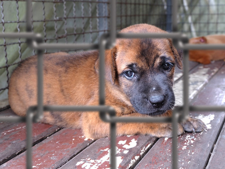 Puppy in a cage Stock Photo