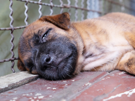 Puppy sleeping in cage