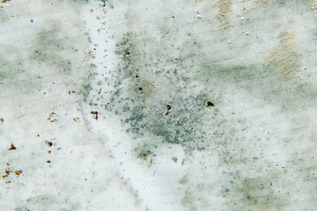 plaster mould: Texture of dried lichen moss on grunge concrete wall