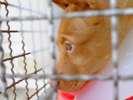 convalesce: Sick Puppies in a cage