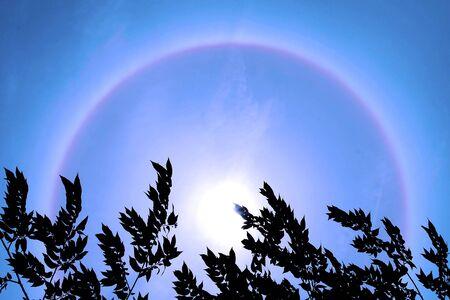 Halo phenomenon, sun behind a bush. photo
