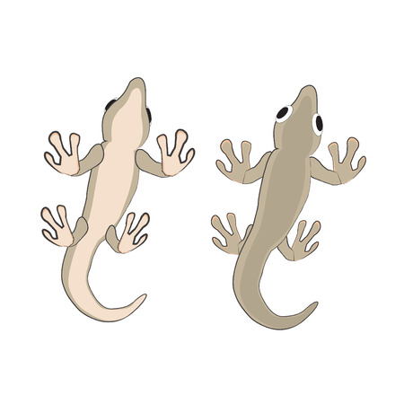 bugaboo: lizard Illustration