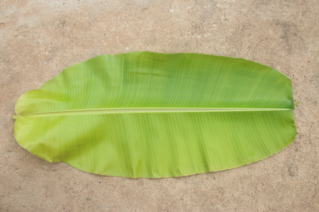 fruit drop: banana leaf Stock Photo