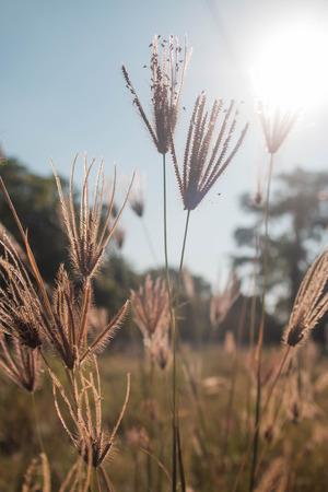 wayside: flowers wayside in day light