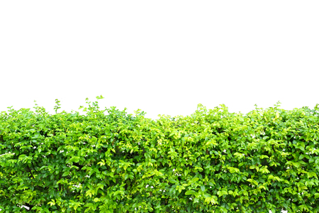 retouch: bush isolated for file retouch Stock Photo