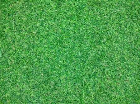 gass: artificial grass texture or grass texture golf and grass texture  football