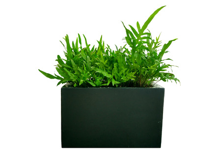 retouch: plant isolated,plant in concrete pot  isolated white background,plant  isolated for retouch Stock Photo
