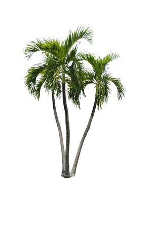 retouch: palm tree isolated,palm tree isolated background,palm tree isolated isolated for retouch Stock Photo
