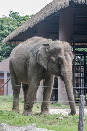 grosse fesse: éléphant Banque d'images