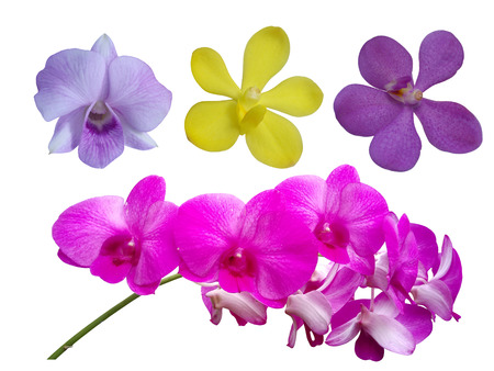 single flower: orchid flowerset,orchid single flower collection set