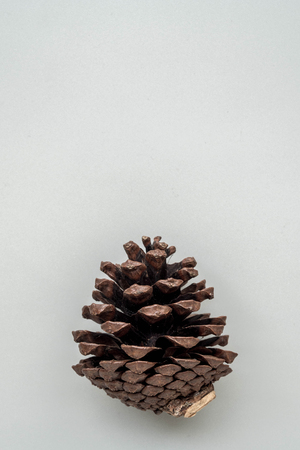 pine cones on gray background