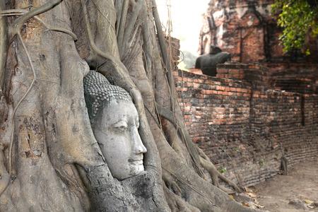 Head of sandstone buddha in tree root photo