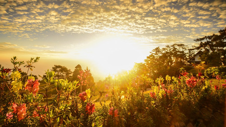 Sunrise Flower Garden