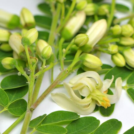 sonjna: Edible moringa leaves with flowers