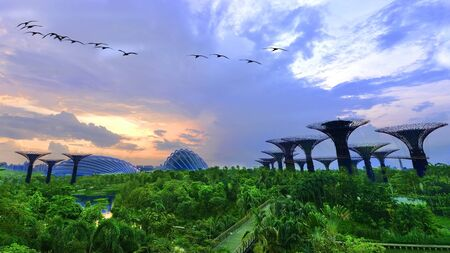 Morning At Gardens by the bay Singapore