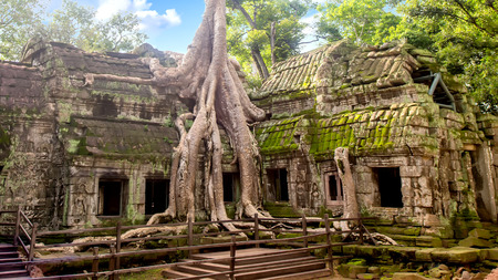 Tree roots growing in Ta Phrom temple in Angkor Wat, Siem Reap, Cambodia