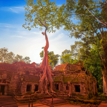 Classical picture of Ta Prohm Temple, Angkor, Cambodia Reklamní fotografie