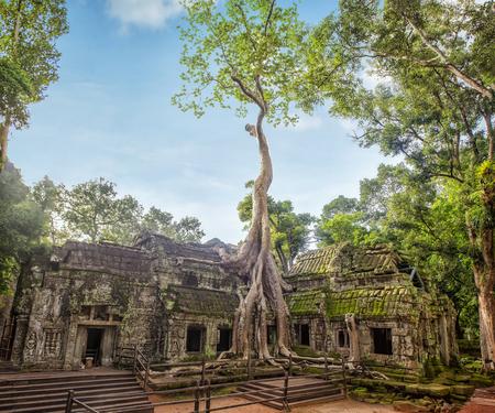 Angkor Ta Prohm Temple of Angkor Thom in Cambodia Reklamní fotografie - 105983573