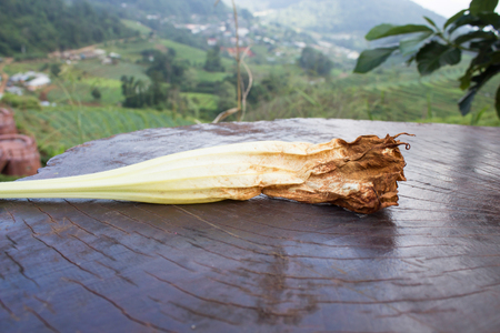pinnacle: Fiori freschi cadono sul tavolo di legno al Pinnacle
