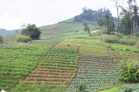 plot: Vegetable plot on  mountain