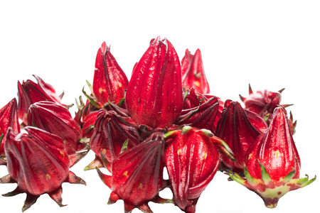 eagerly: Roselle on a white background