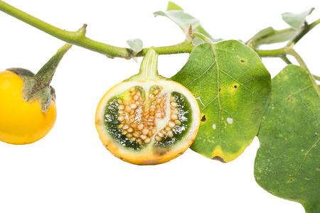 Verschiedene Arten Von Aubergine, Aubergine, Aubergine, Gelb, Weiß ...