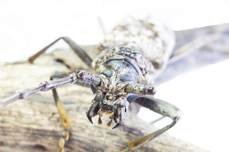 beetle isolated on white  photo
