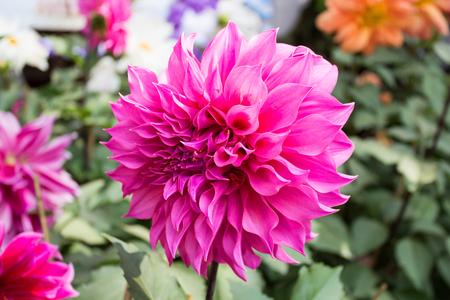 lindi: Beautiful flowers  Stock Photo