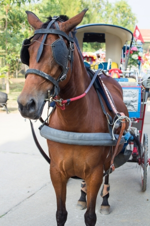 Horse carriages for tourist services in Lampang Thailand photo
