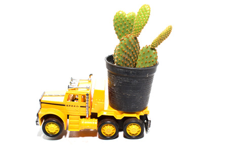 cactus on toy car the truck isolated on a white background photo