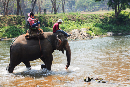 tourists to ride on an elephant in thailand photo