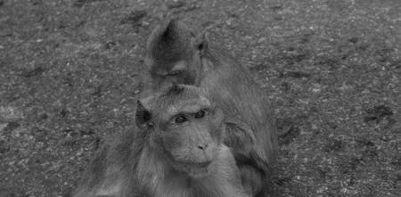 conglomeration: monkeys  Stock Photo