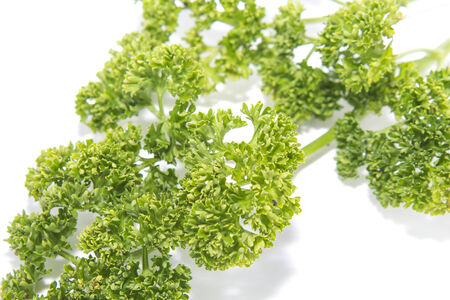 curly leafed: Bunch of fresh parsley isolated over white background