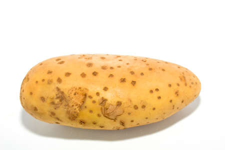 potato on white background  photo