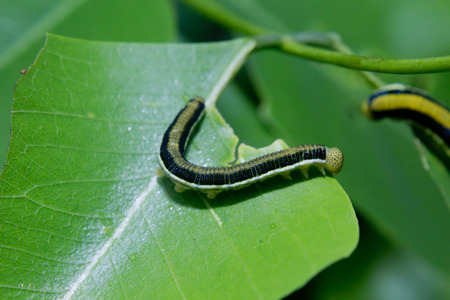 worm on the leaf