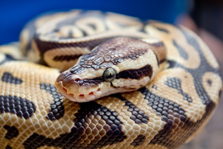 cold blooded:  snake Stock Photo