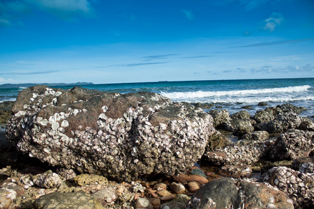 Rocky seaside in the sea of thailand photo