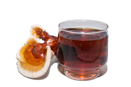 Ganoderma lucidum and tea cup