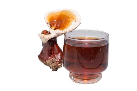 Ganoderma lucidum and tea cup