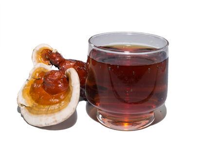lucidum: Ganoderma lucidum and tea cup