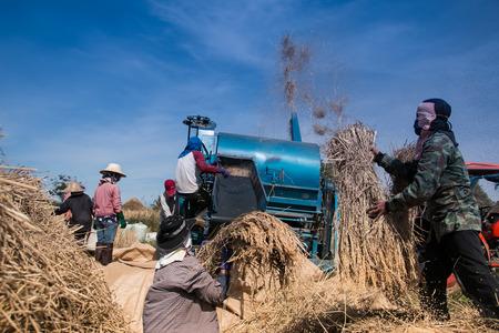 farmers threshing rice photo
