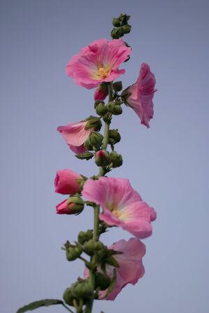 environmen: Winter flowers in Mae Hong Son Province