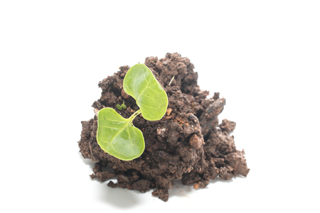 soil with green seedling isolated on a white background photo
