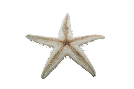 sea star: Sea star isolated on white