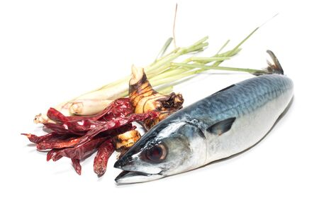 Fresh fish Mackerel, tuna, saba, on a white background photo