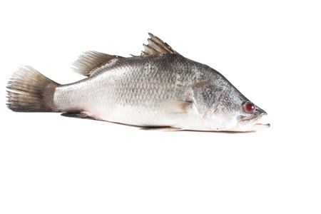 Snapper isolate on white Stock Photo
