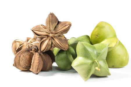 Plukenetia volubilis, commonly known as sacha inchi, sacha peanut