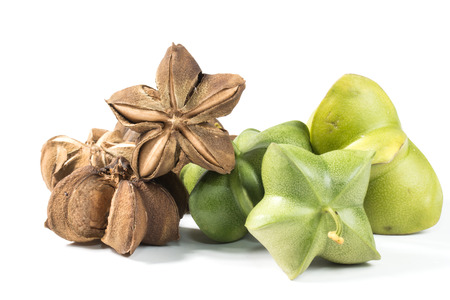 cacahuate: Plukenetia volubilis, conocido comúnmente como sacha inchi, maní sacha